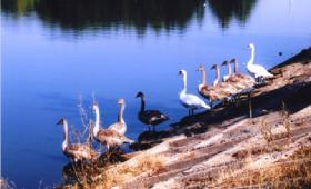 Створення об'єкту природно-заповідного фонду – гідрологічного заказника місцевого значення «Ільківський став»*